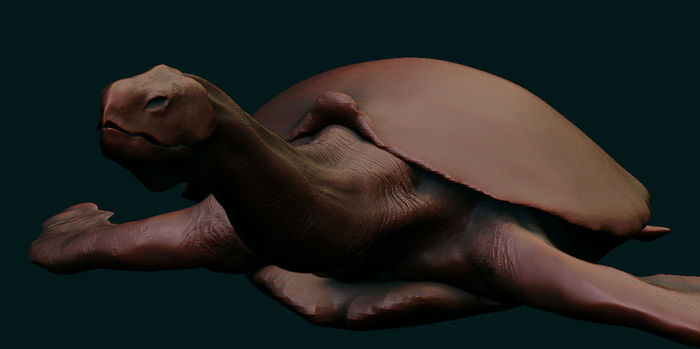 WIP Giant Sea Turtle Model