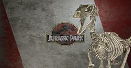 Skeleton Raptor