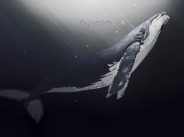 Whale Low Polygon Art Animal