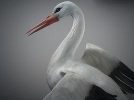 Animated Stork