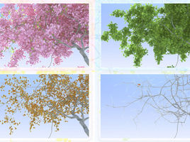 Sakura Tree: Four Seasons
