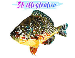 3D asset Low Poly Redear Sunfish Illustration Animated - 1