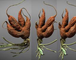Old five steam carrot root 3D asset