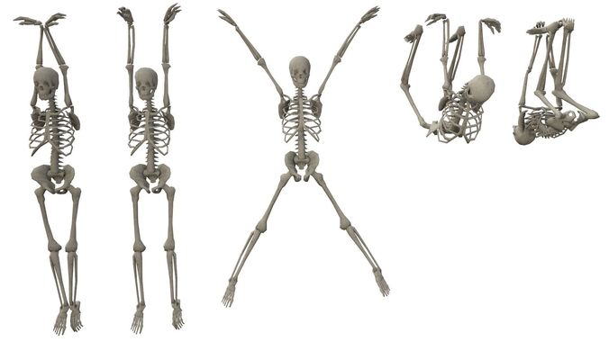 skeleton hanging poses 3d model obj mtl fbx ma mb dae tga 1