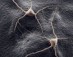 3D model two neurons on a background
