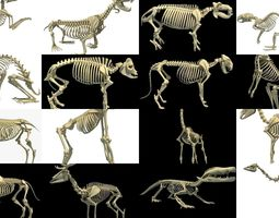3D Animal Skeleton Collection