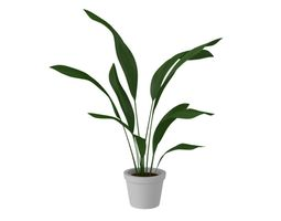 Indoor Plant 3D model indoor