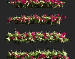 3D model Plant Geranium Facade v2