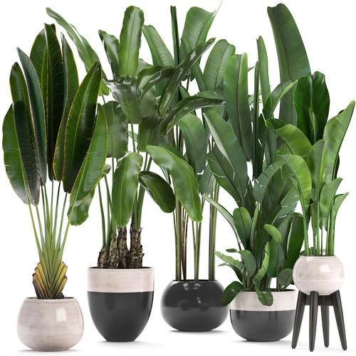 exotic plants banana tree 3d model max obj mtl fbx 1
