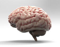 Brain 3D model medical