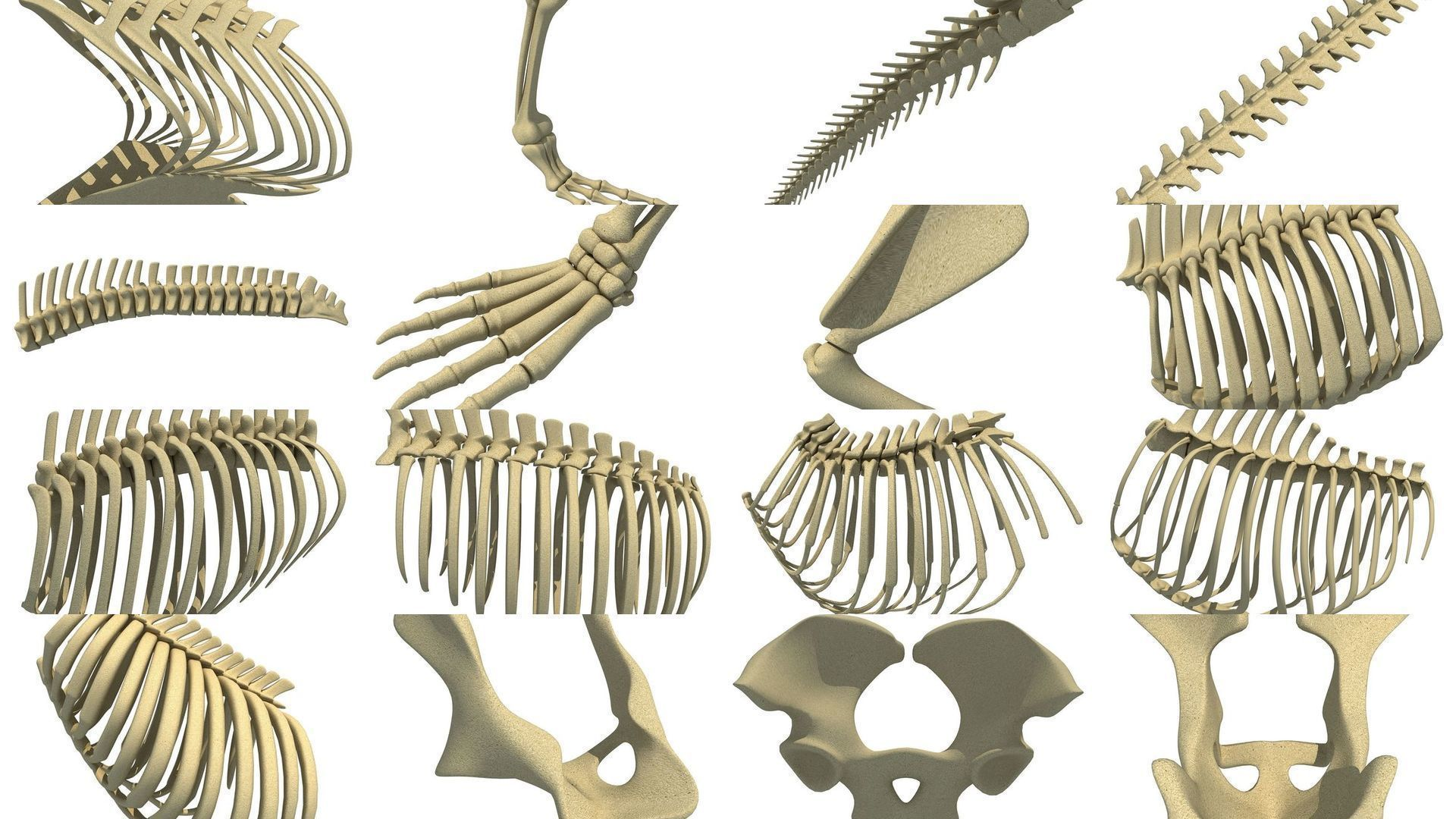 Animal Bones Collection |