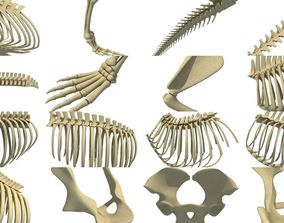 Animal Bones Collection 3D model