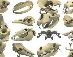 Animal Skulls 3D Models Collection