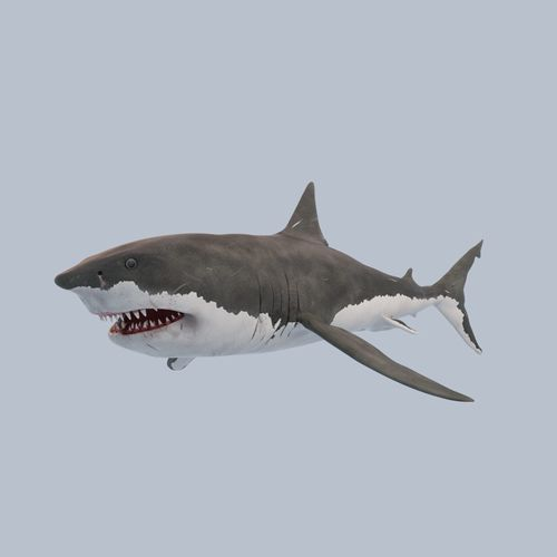 great white shark 3d model low-poly rigged max obj mtl 3ds fbx 1