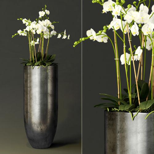 orchid 3d model max obj mtl fbx 1