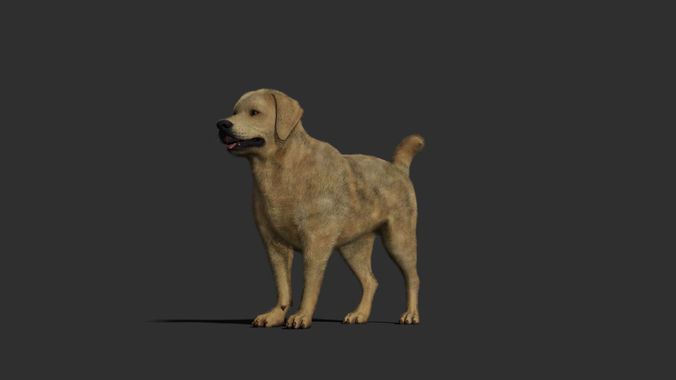 dog rigged and animated 3d model low-poly rigged animated obj mtl fbx ma mb 1