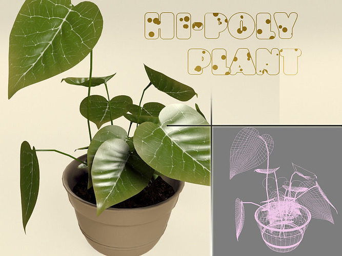 calla plant 3d model max obj mtl fbx tga 1