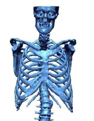 human skeleton 3d model obj mtl 3ds stl wrl wrz ply 1