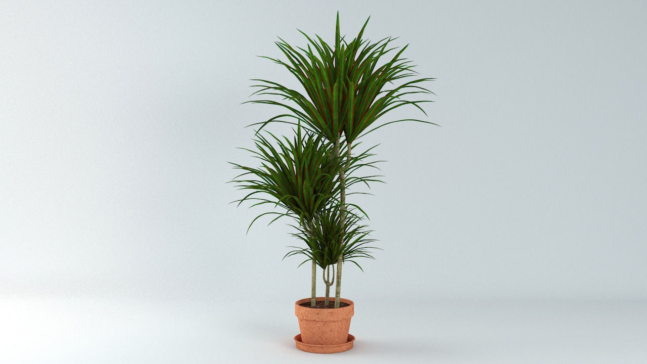 Dracaena marginata plant 3d model max obj 3ds fbx for Dracaena marginata