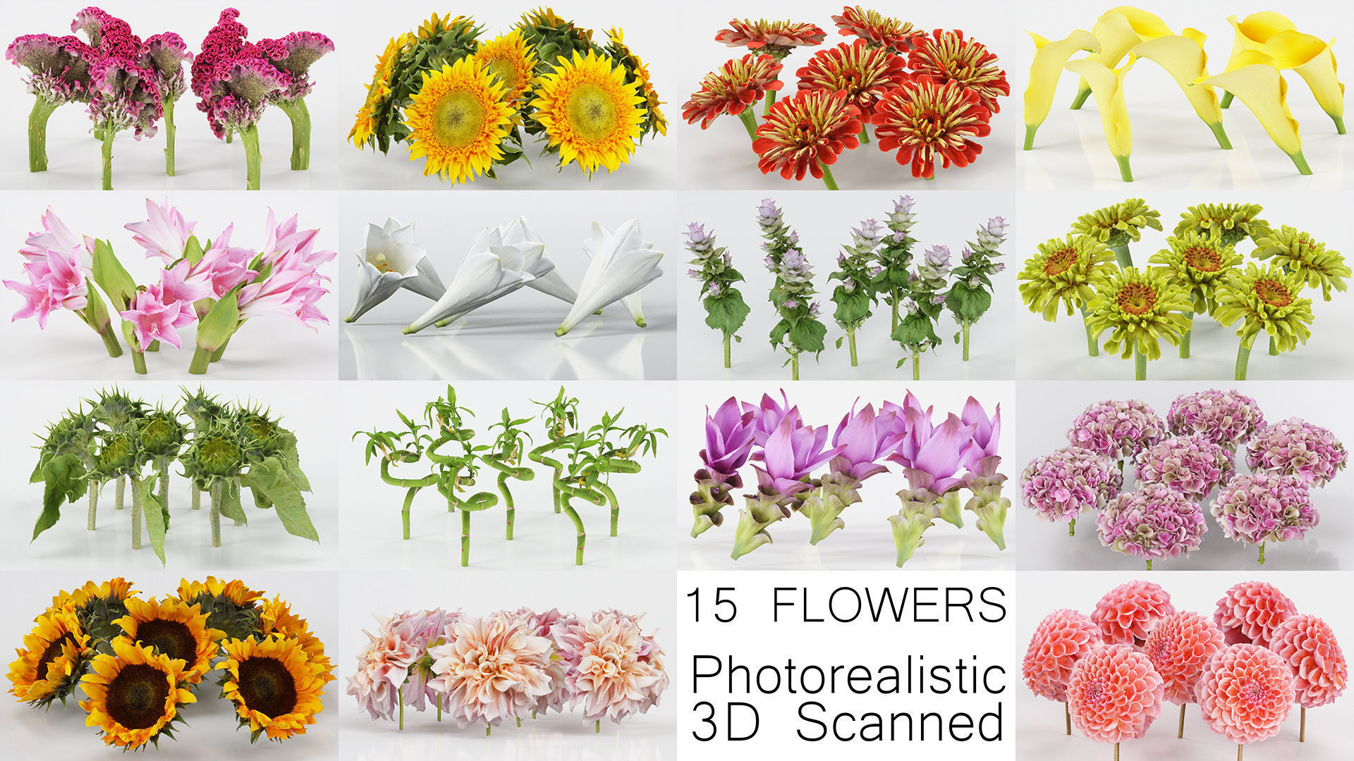 15 Flowers Collection