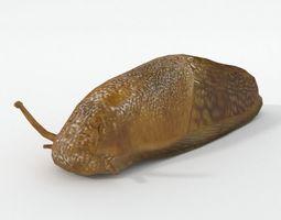 Slug Animal 3D asset