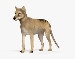 Thylacine HD 3D model