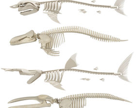 3D 2 Whales and 2 Sharks Skeletons