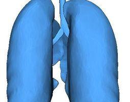3D print model Human Lungs