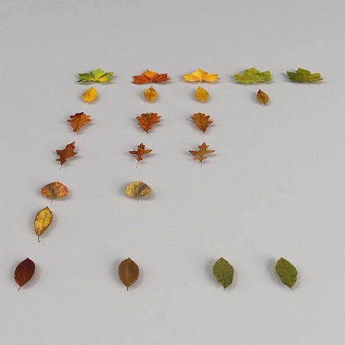 dead autumn leaves 3d model max 3ds fbx 1