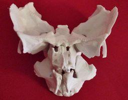face - partial skeleton human 3d printable model