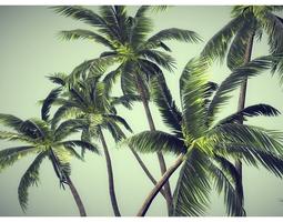 3D asset low poly palms pack