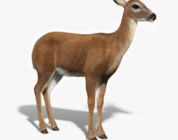 White Tailed Doe FUR 3D Model