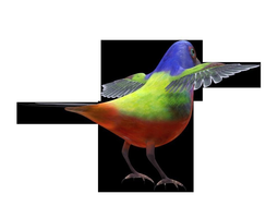 3d model low-poly bunting bird
