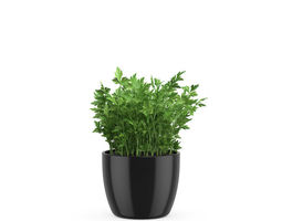 Parsley 3D model