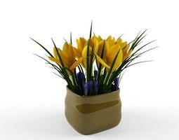 crocus yellow 3D Model