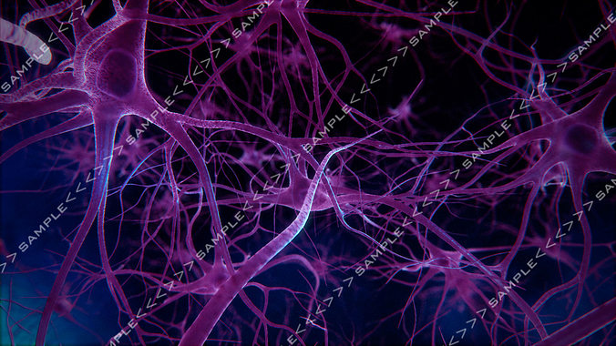 neurons stock images 3d model  1