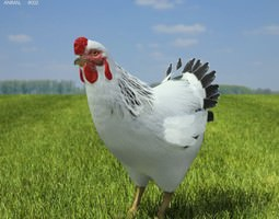 3d model chicken hen gallus domesticus VR / AR ready