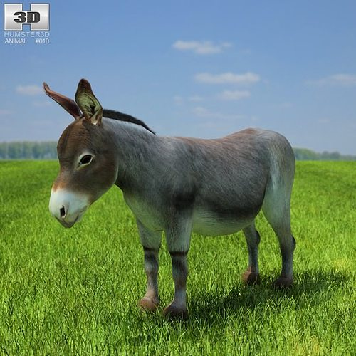 donkey equus africanus asinus 3d asset cgtrader. Black Bedroom Furniture Sets. Home Design Ideas