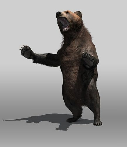grizzly bear 3d model low-poly rigged max obj mtl 3ds fbx stl tga 1
