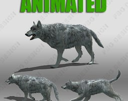 realtime 3d asset grey wolf animated