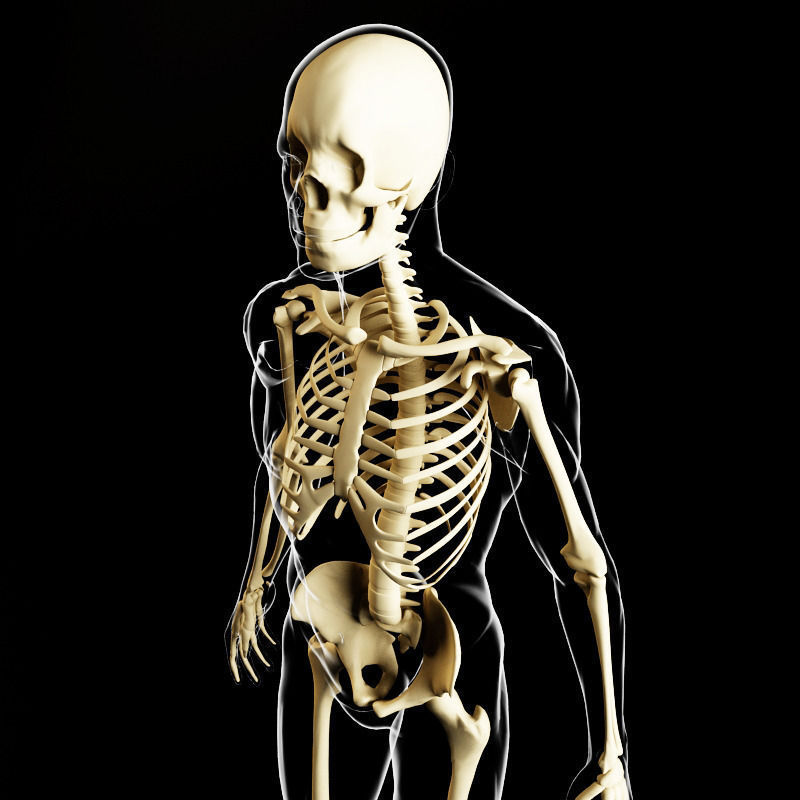 Skeleton and human body 3D Model MAX OBJ FBX MTL