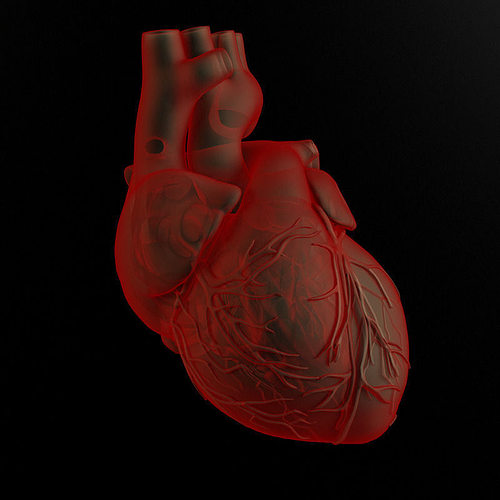 heart and body 3d model max obj fbx mtl 1