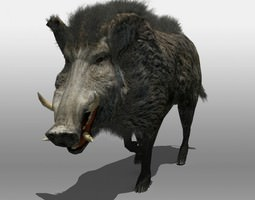 3d animated wild boar