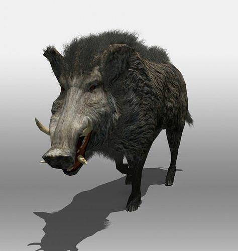 wild boar 3d model rigged animated max obj mtl 3ds fbx stl tga 1