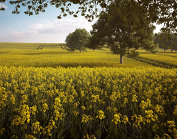 rapeseed 3d model