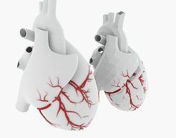 3D Human Heart Mesh