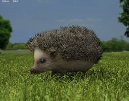 Hedgehog Erinaceinae 3D model