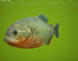 low-poly 3d model red-bellied piranha pygocentrus nattereri