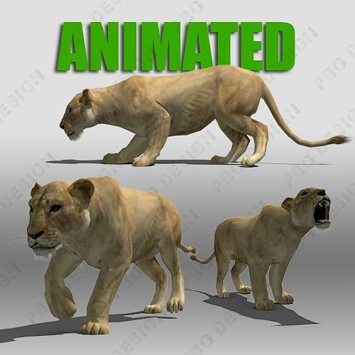 lioness animated 3d model low-poly rigged animated max fbx 1
