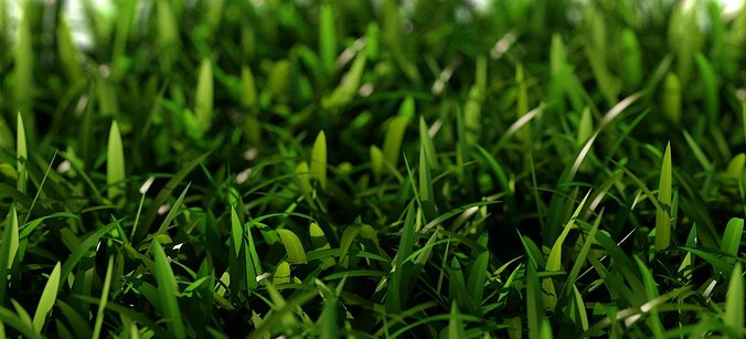grass short d 3d model max obj fbx mtl 1